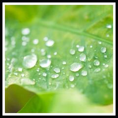 微酸性電解水で野菜を洗浄